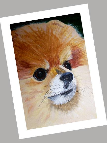 Pomeranian Cards Set of 4