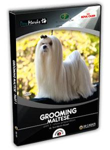 Maltese Grooming Video part 1