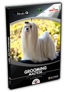 Maltese Grooming Video part 1