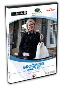 Maltese Grooming Video part 2